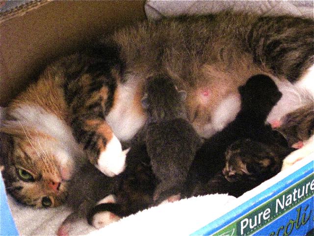 Nutmeg nursing her babies